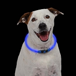 Nite Howl Safety Necklace Collar -SOLD 12 QTY  $8.15 EA.